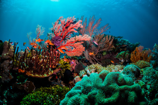 Beautiful coral scenes with vibrant fish life and divers
